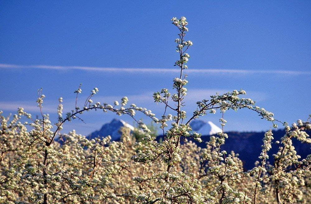 Frühlingsurlaub im Eisacktal – Naturgenuss in den Südtiroler Bergen
