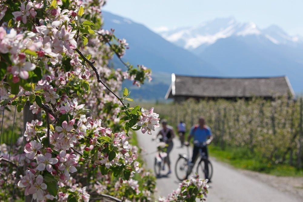 Wandern und Radfahren: Aktivurlaub im Frühling