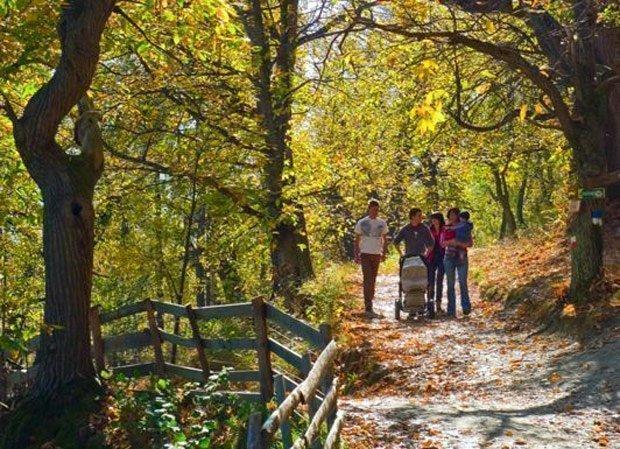Naturgenuss in der Südtiroler Bergwelt